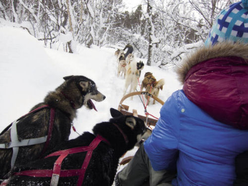 dogsled Are Sweden CREDIT Fredrik Broman