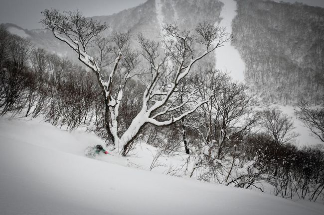 Niseko Powder Skiing.jpg